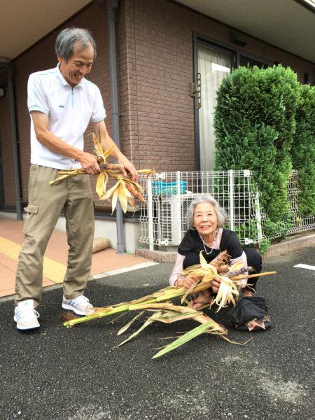 トウモロコシを収穫しました